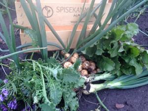 grønsager i dag 16.06.